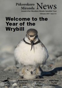 Cover of  Issue 111, wrybill brooding a chick